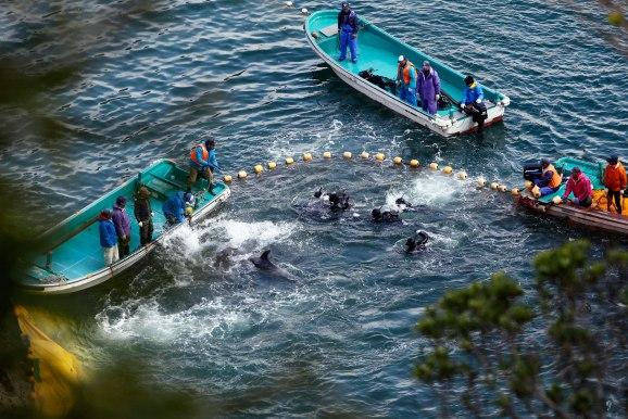 01taiji-dolphin-hunt