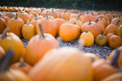 Normal-Pumpkins